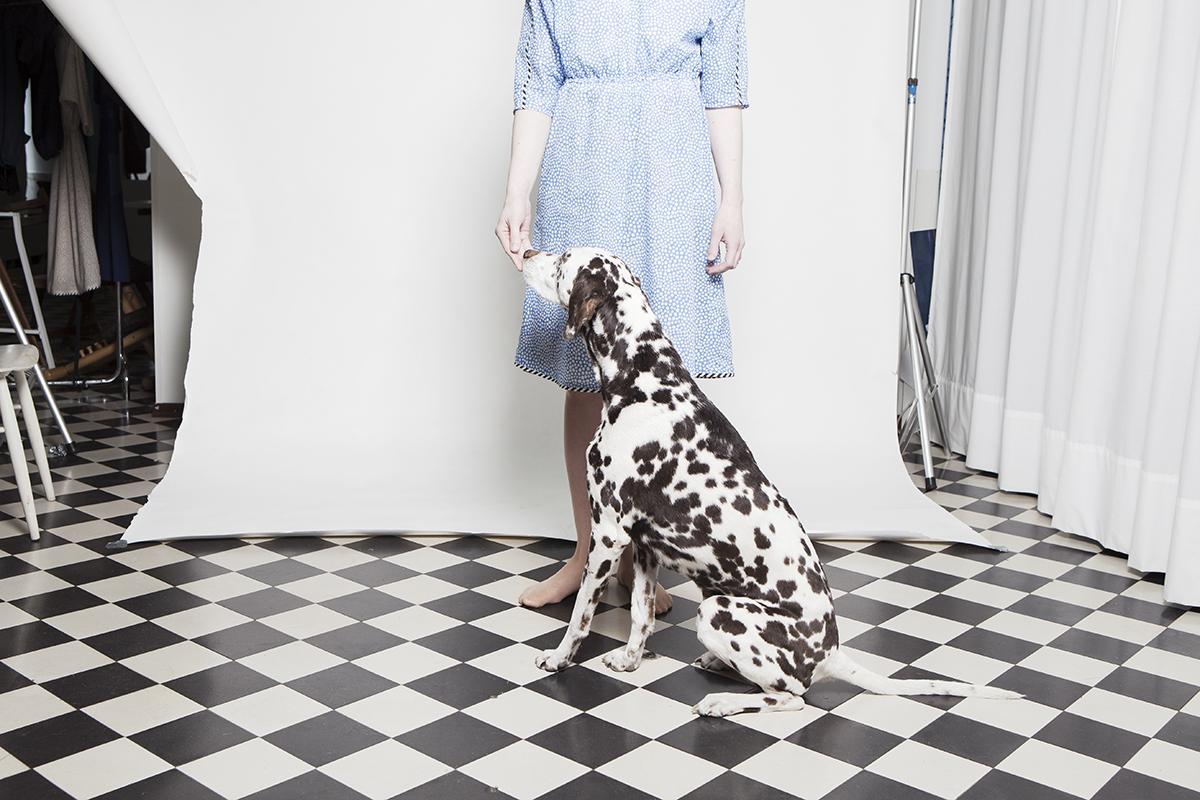 Nice dog.jpg