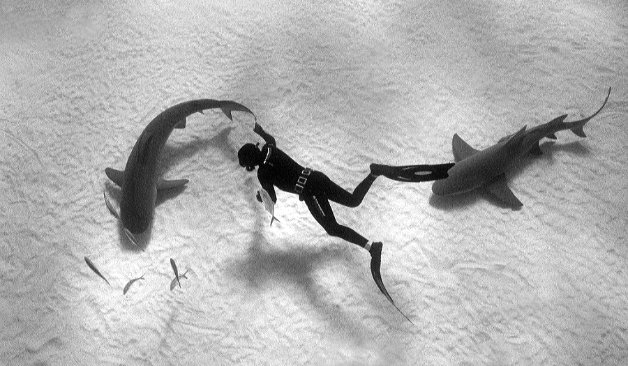 Freediving with juvenile tiger shark and lemon shark.  Photo by Wolfgang Leander (freediving)