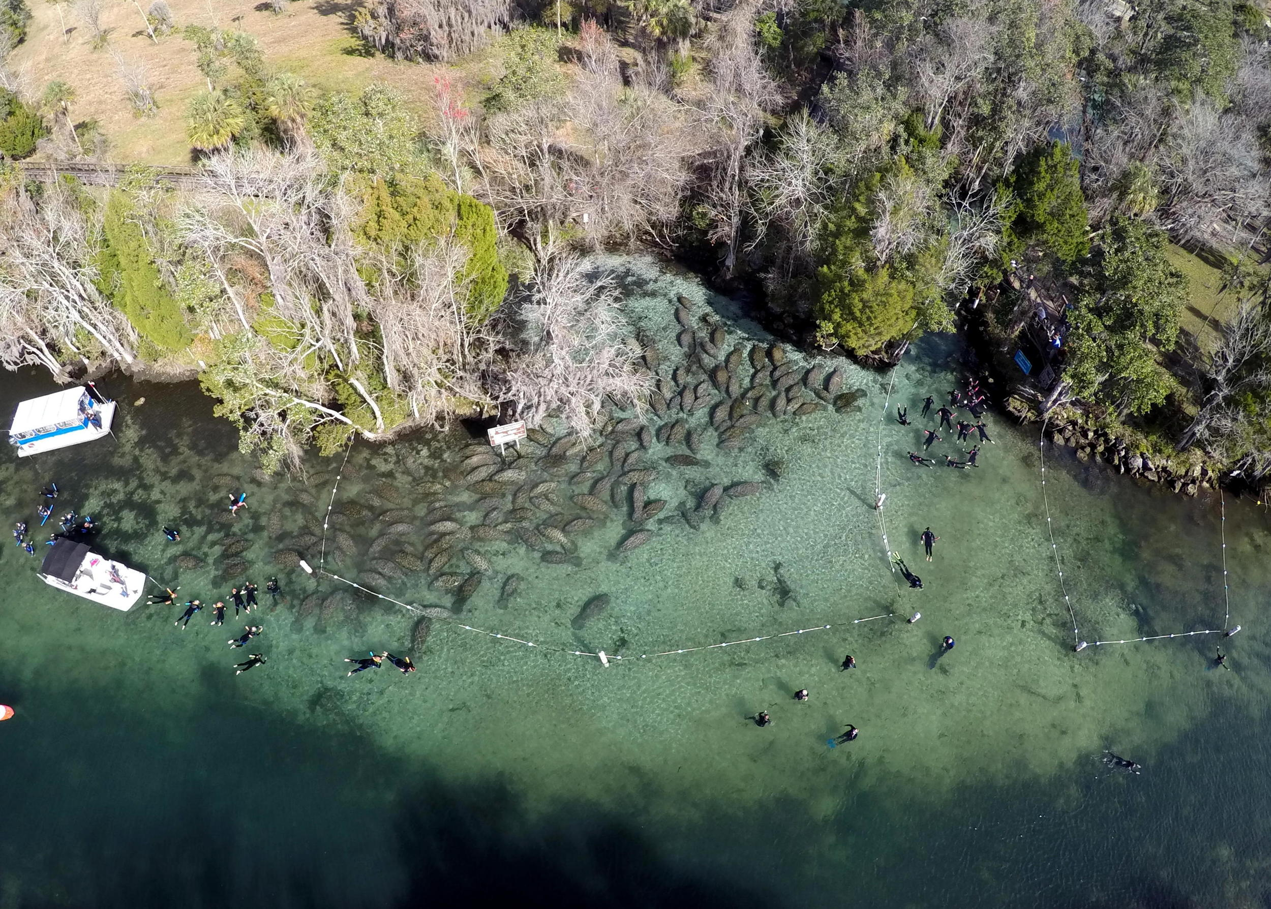 Three Sisters - Manatees and Noodlers. Image by Manuel Menendez