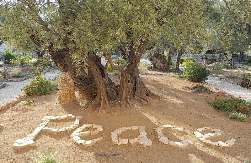 The word Peace written in stones under an ancient olive tree