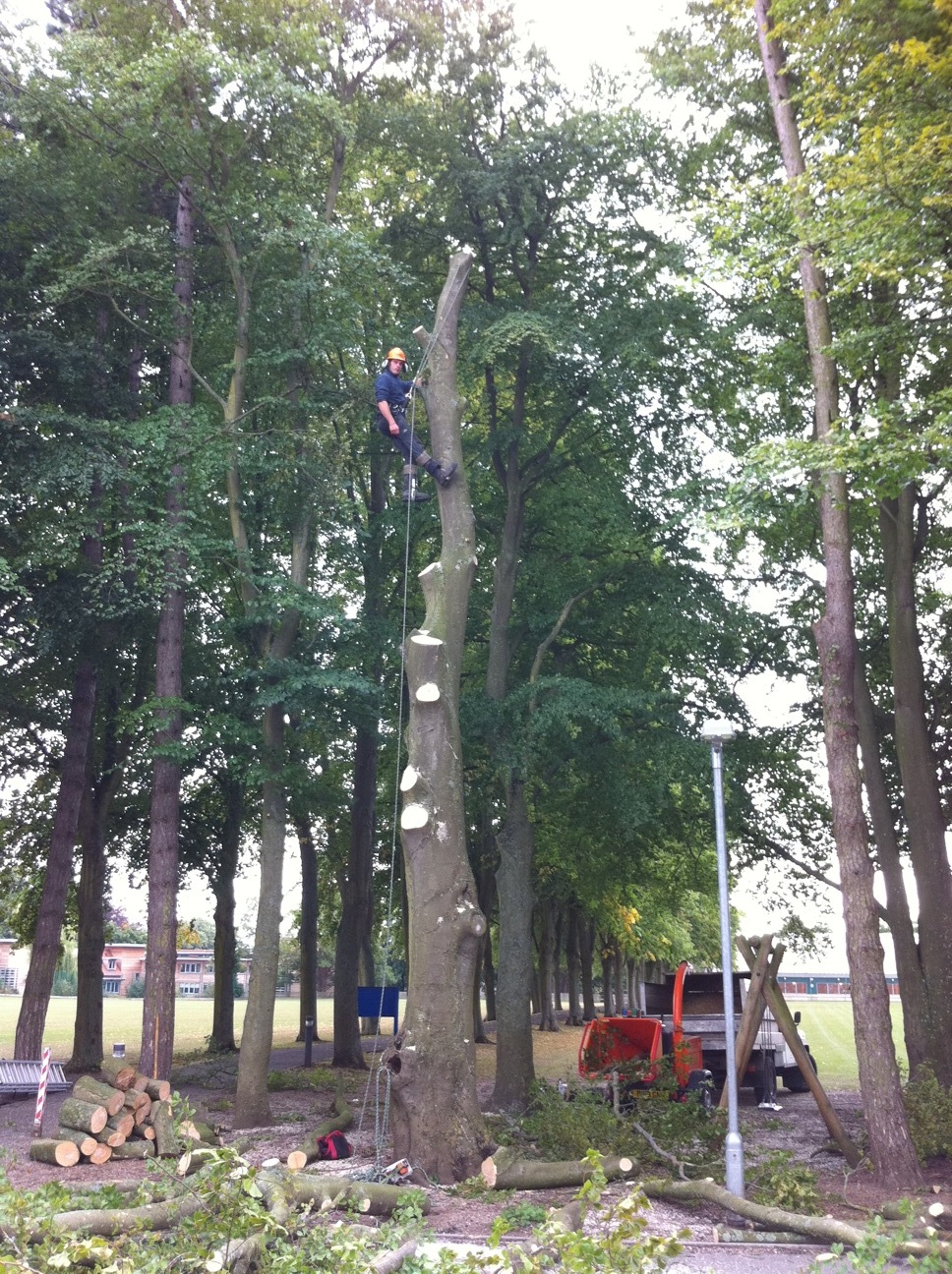 Removal of Beech Tree, St Mary's School, Calne.JPG