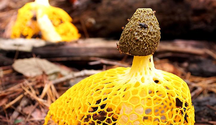 Fungus3.jpg