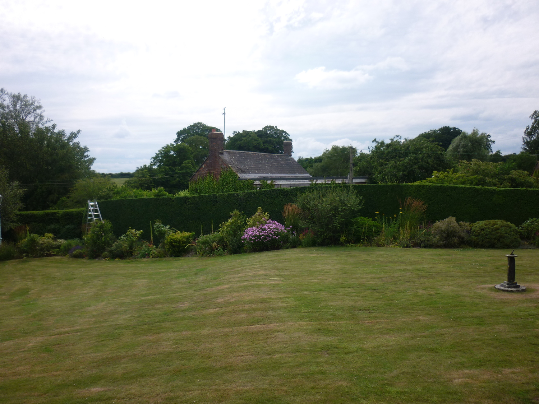 Large Box hedge.jpg