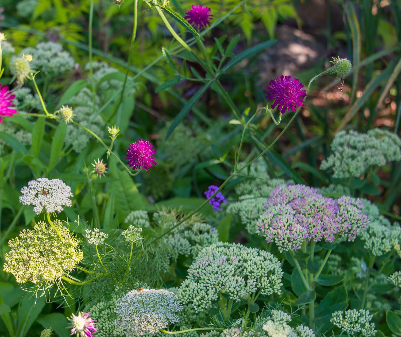 flowers-1158.jpg