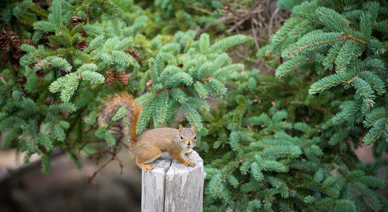 squirrel-0815.jpg