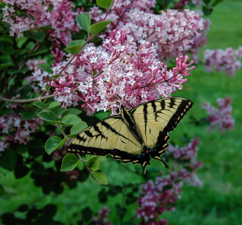 butterfly-0329.jpg