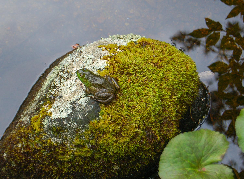 frog-0149.jpg