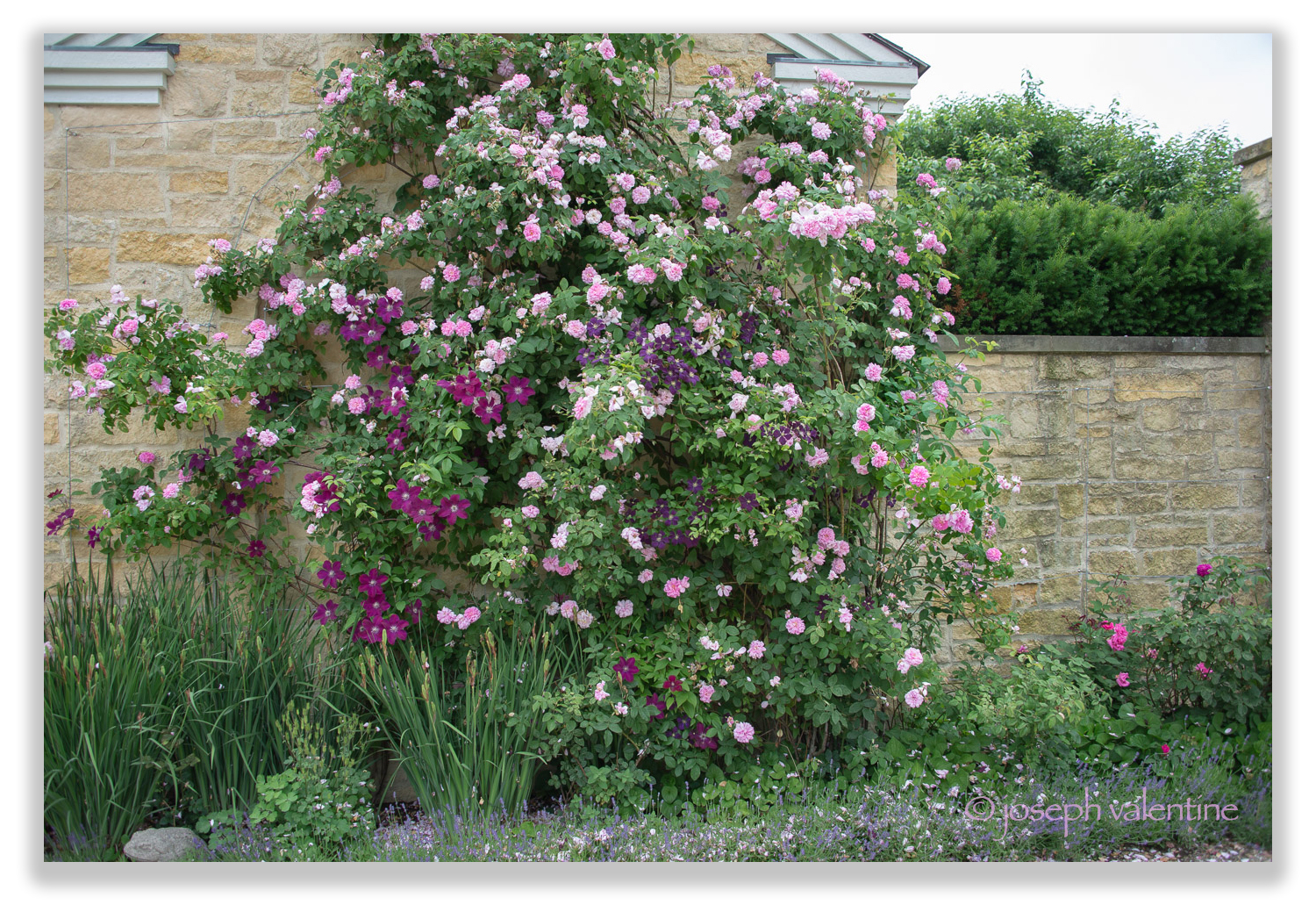 Roses and clematis scramble up a wall together in Linda Allard's Connecticut garden. It's no surprise that Linda's garden oozes with style. For many years Linda was the chief designer and creative genius behind Ellen Tracy fashions.