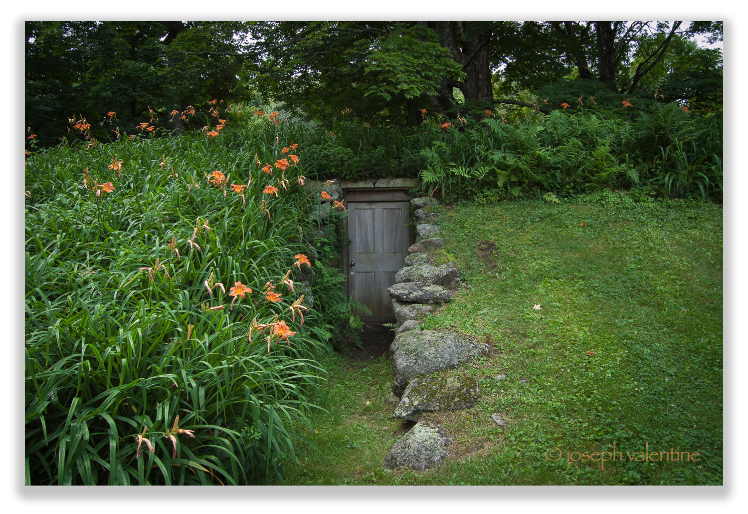 A portal to another world? The weathered-grey door of Eleanor Briggs' root cellar is set within a bank of daylilies and ferns.