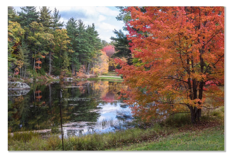 Orange Maple, Hancock, New Hampshire