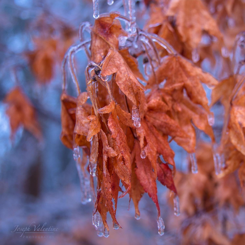Ice Storm-0115 copy.jpg