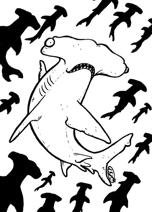 sharkweek2012-hammerhead-bw.jpg