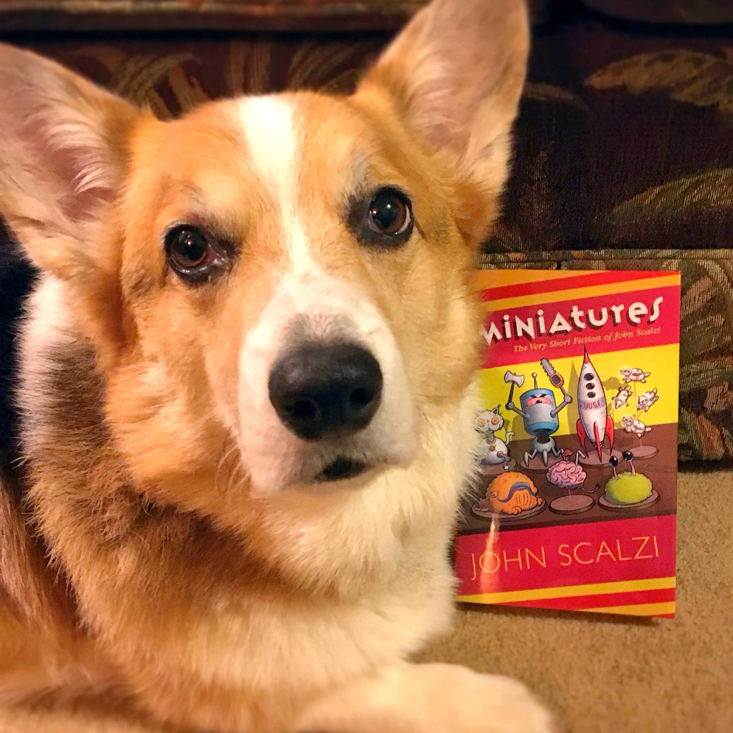 Also, pupper approved!