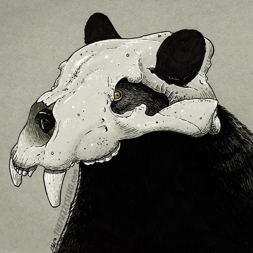 Arctodus simus skull black bear