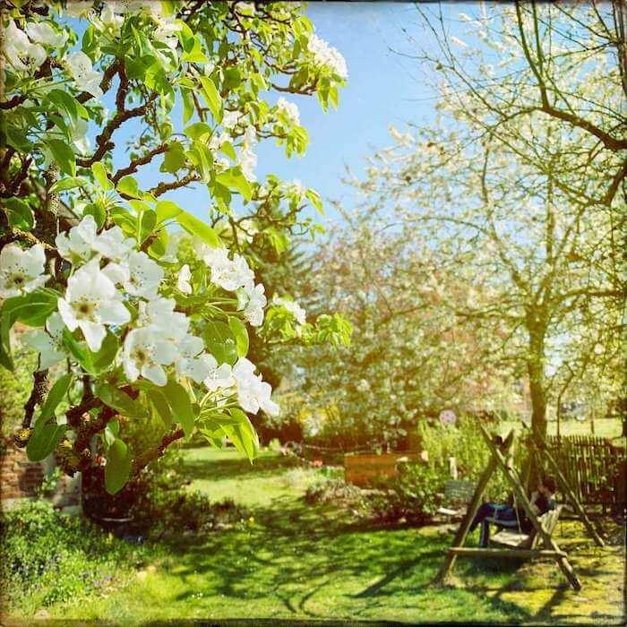 Garten_Birnenblüten.jpg