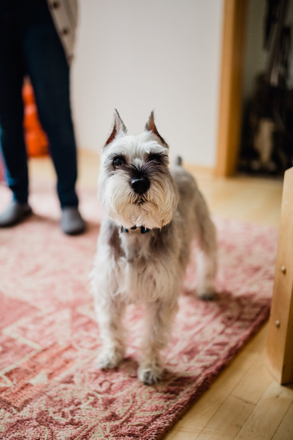 10.29.17_Norton_Dogs_10.jpg