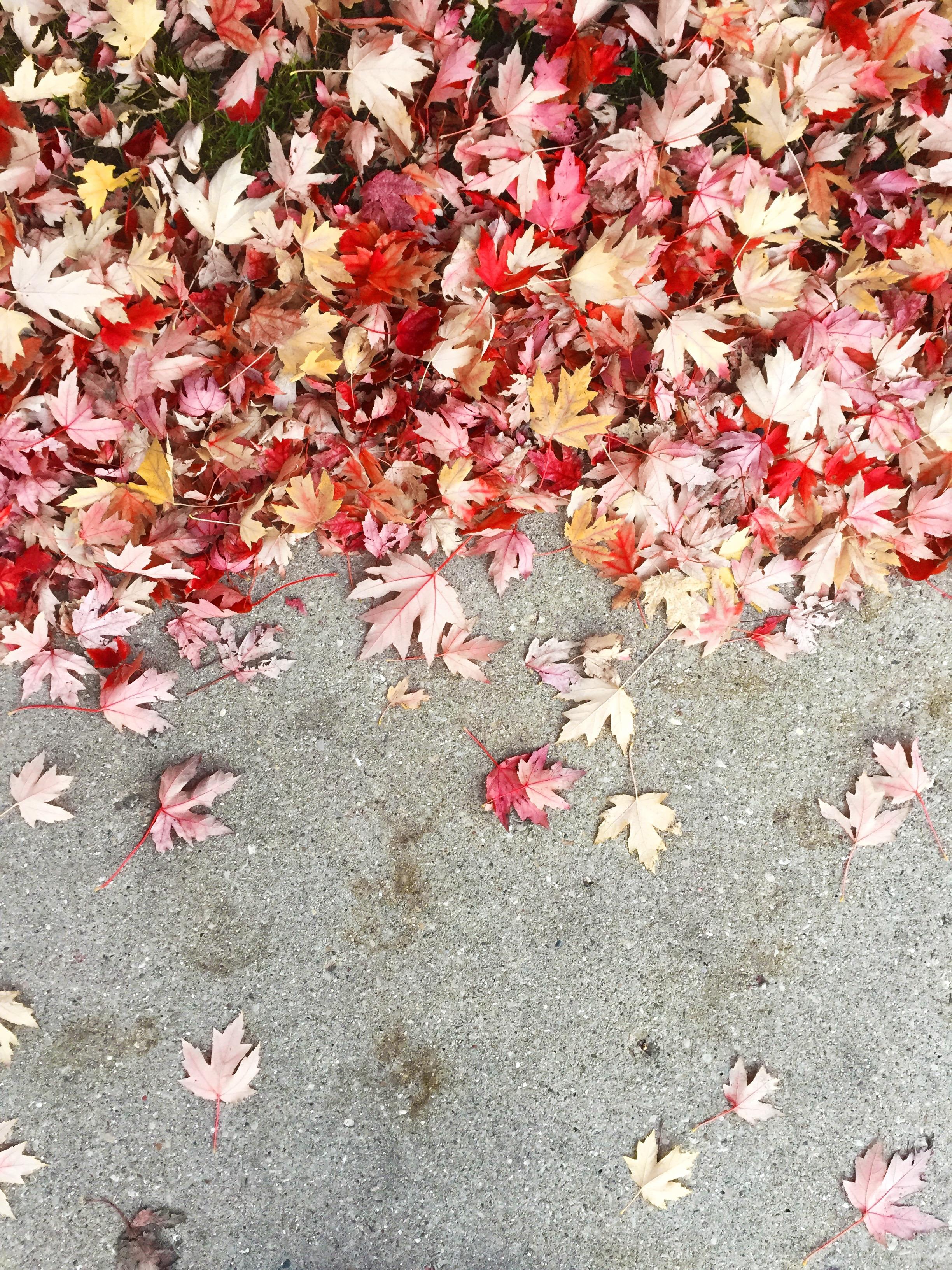 autumn season.jpg
