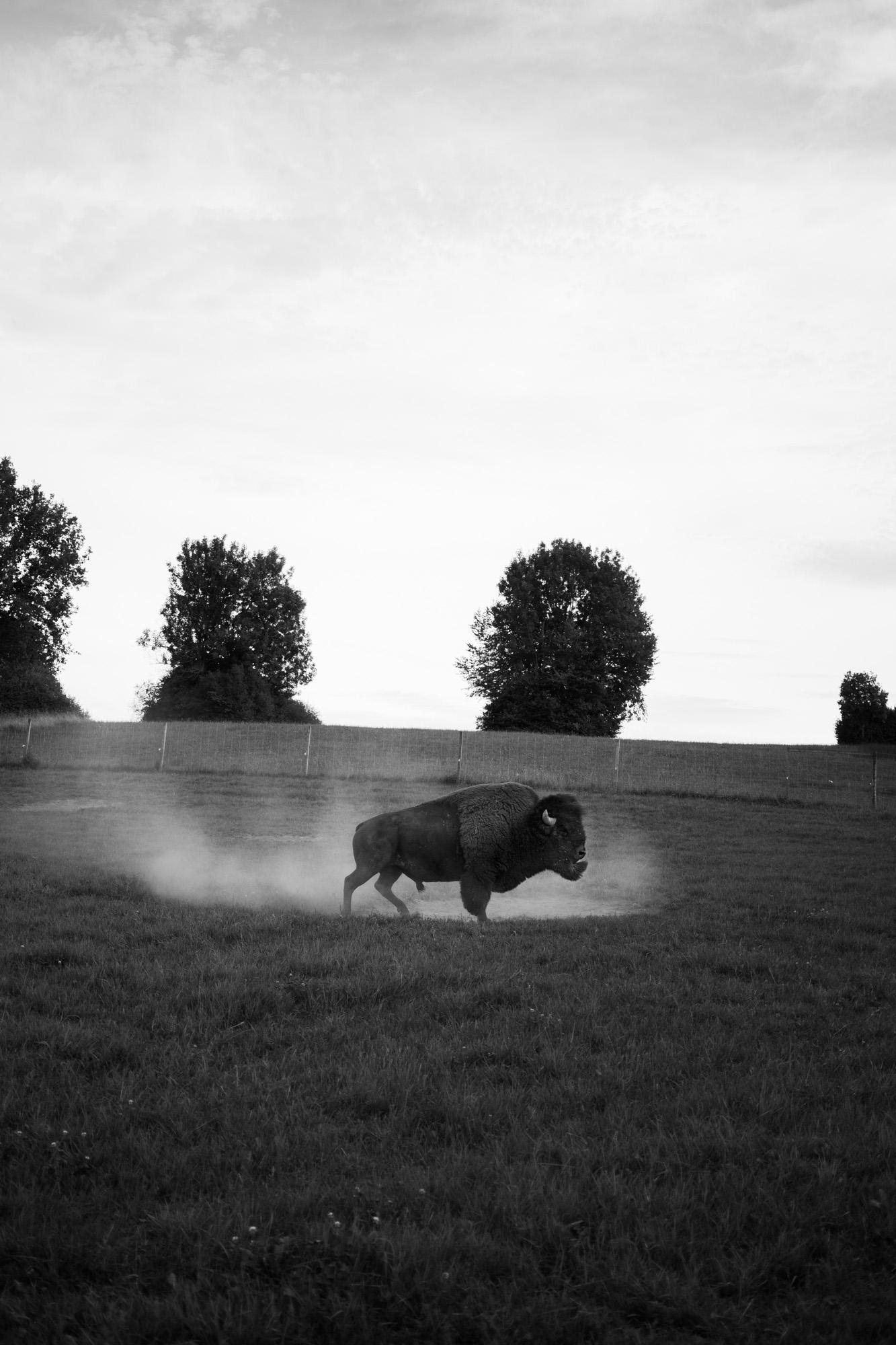 nouveau-monde-fribourg-suisse-photographe-pierre-yves-massot-3.jpg