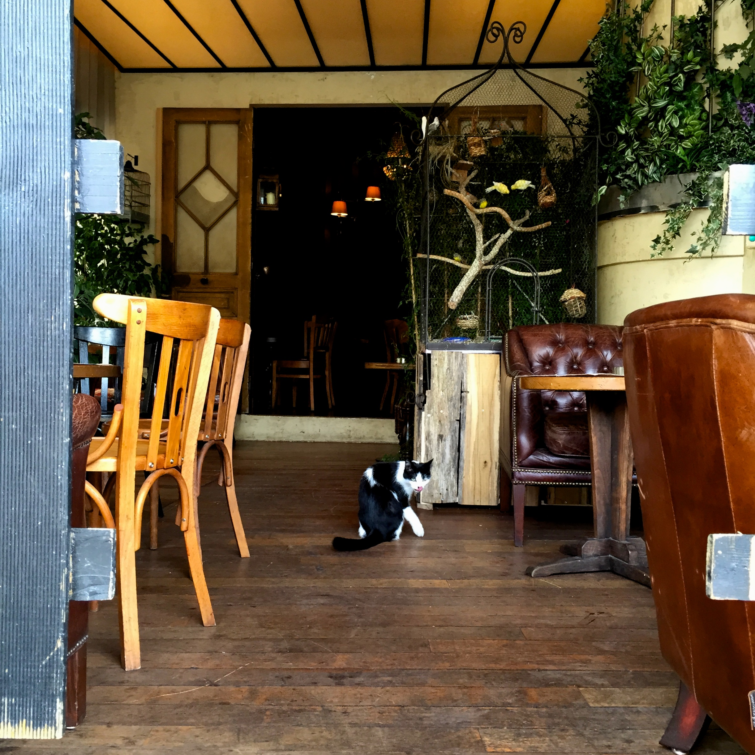 bird_cat_cafe 280.jpg