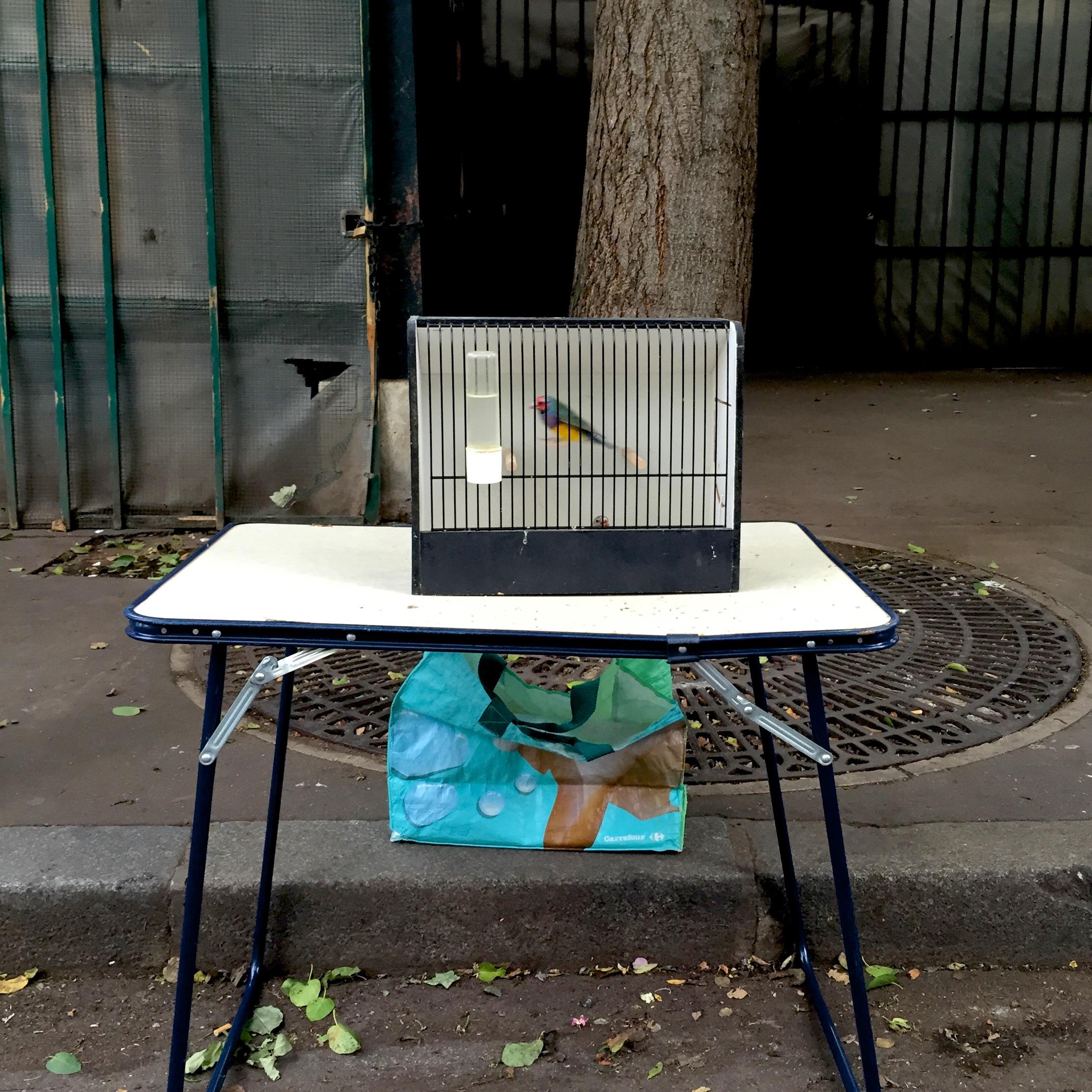 one_caged_bird 275.jpg