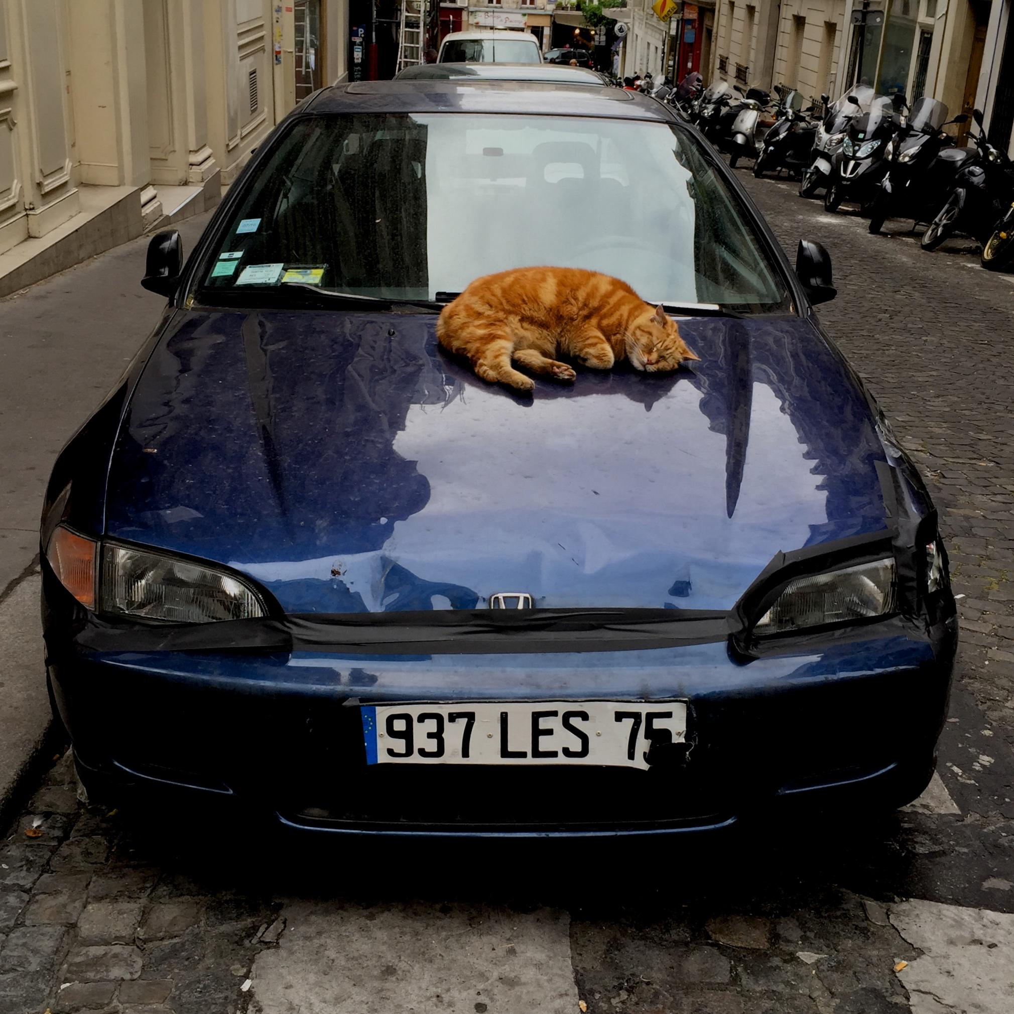 sleeping_cat 294.jpg