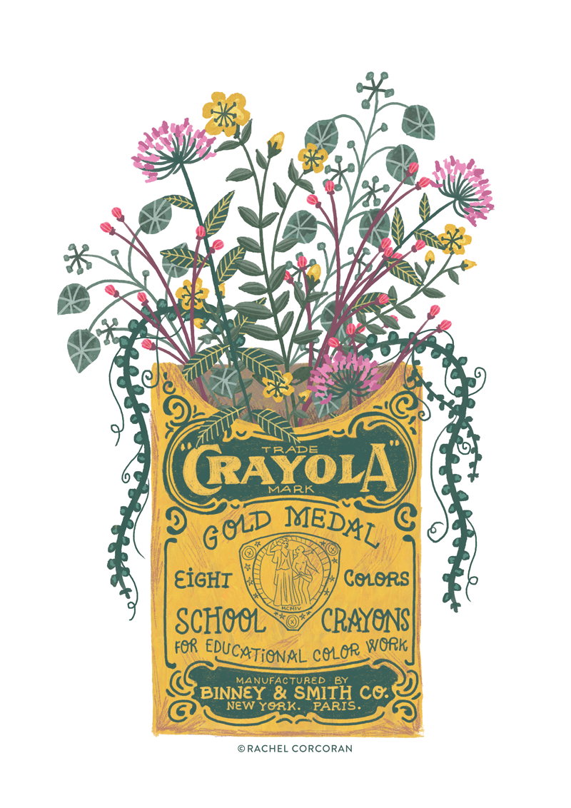 Wildflower crayola illustration by Rachel Corcoran