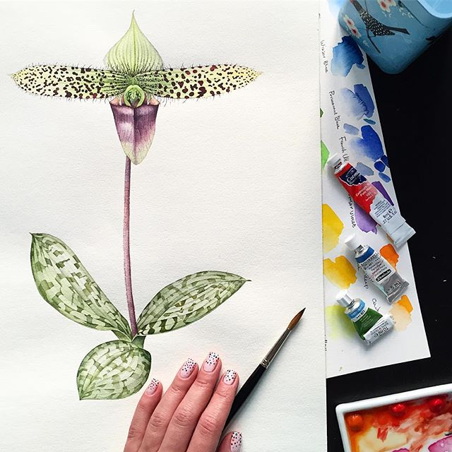 Lady Slipper Orchid for Exotic Flowers series. Find more on my website olgachuykova.com • • •  #watercolor #waterblog #artcommission #commissionwork #wip #artist #watercolors #art #botanicalart #botany #orchid #orchidpainting #watercolorpainting #painting #fineart #floral #watercolour #imanartist #berlin #berlinart #kunst #follow4follow #like4like #leaves #green #slipperorchid #ladyslipperorchid