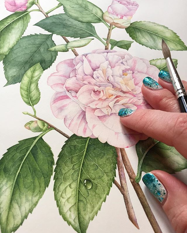 Camellia Japonica. Discover and purchase my work at olgachuykova.com ••• #botanicalgardens #botanical #botany #botanicalartist #botanicalart #camellia #camelliajaponica #art #artist #artistic #artcommission #watercolor #watercolorart #watercolour #watercolorartist #artistsoninstagram