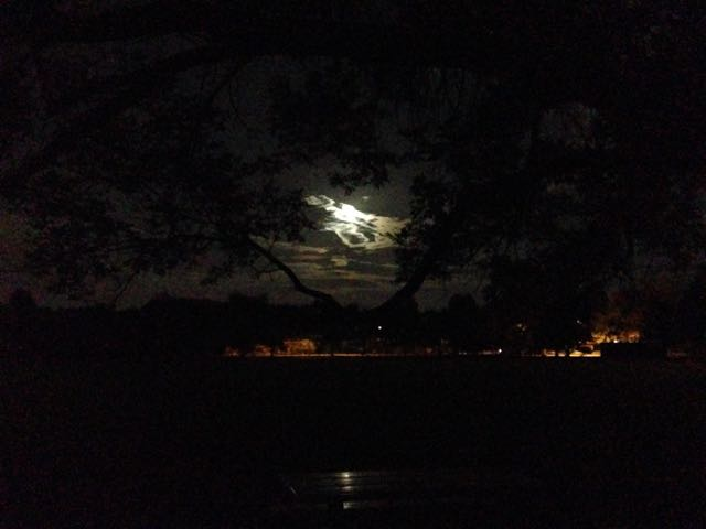 Another damn moon picture.
