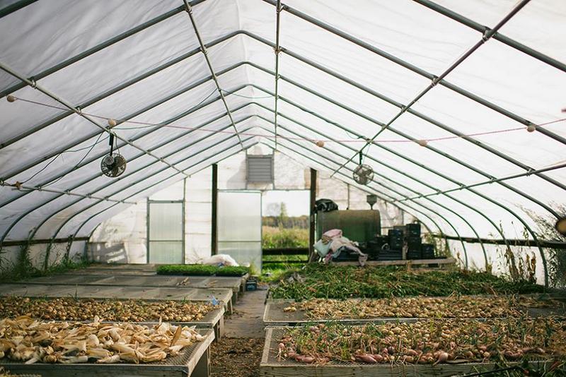 Foxtail Farm - Produce