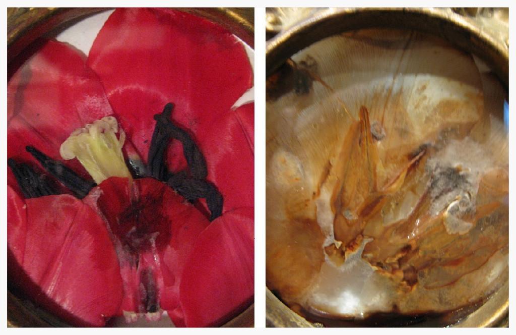 tn_1200_tulip.2.jpg.jpg