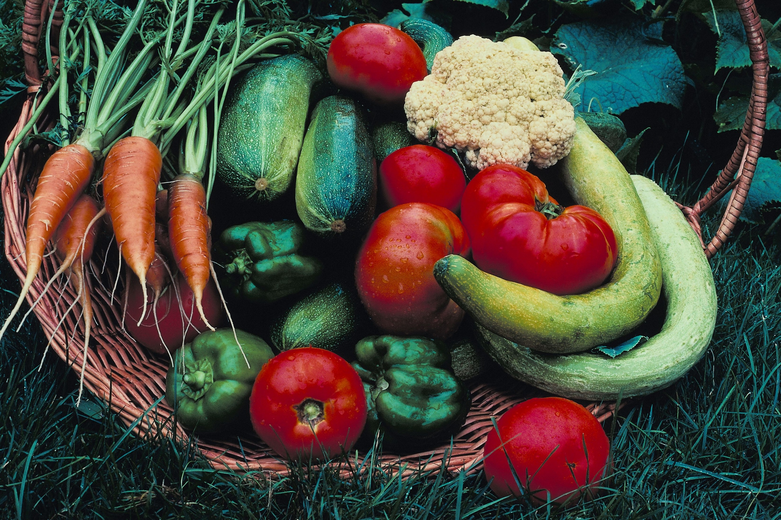abundant fresh vegetables