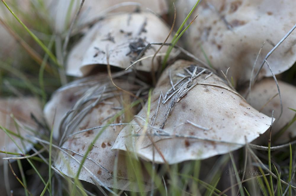 Mushroom Cluster.jpg