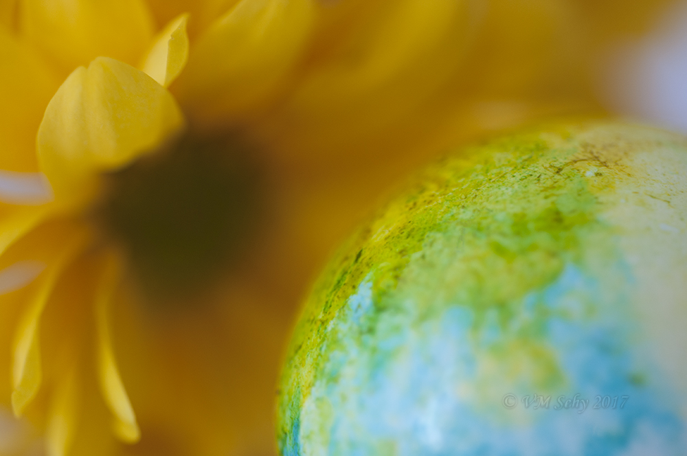 Flower 11.jpg