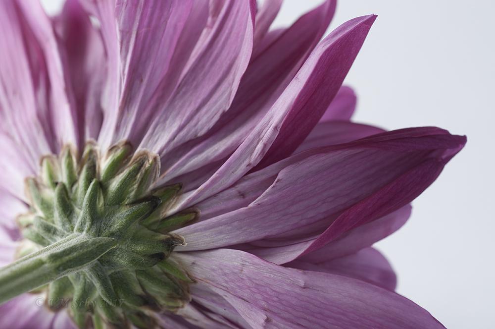 Flower 19.jpg