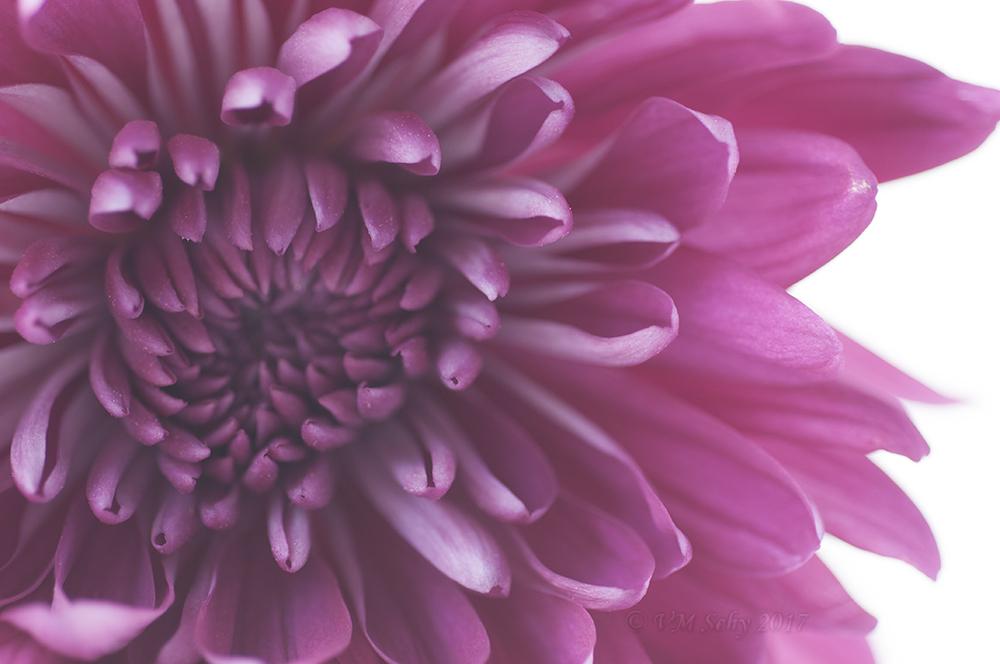 Flower 20.jpg
