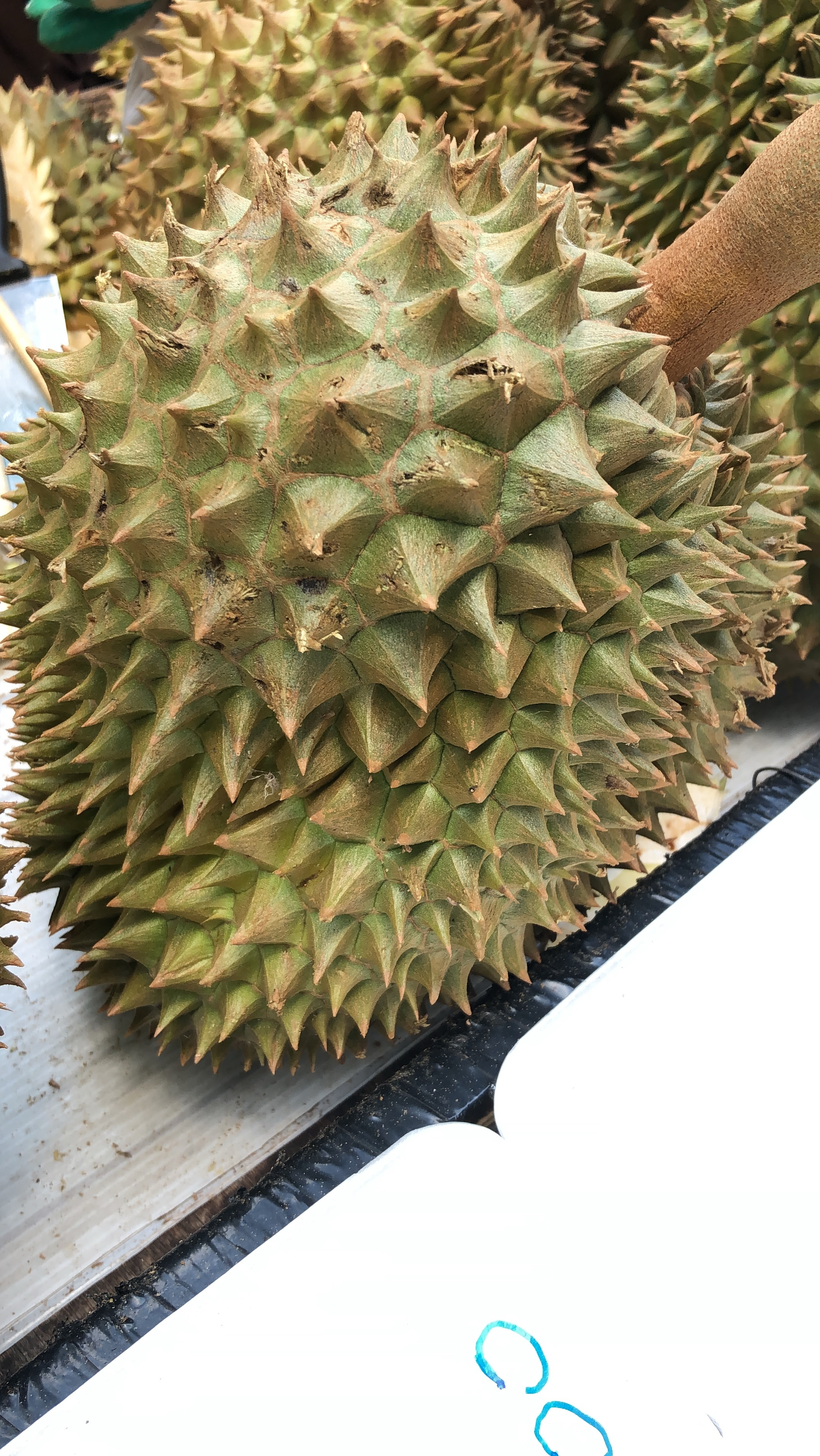 Durian fruit at Chatuchak Weekend Market