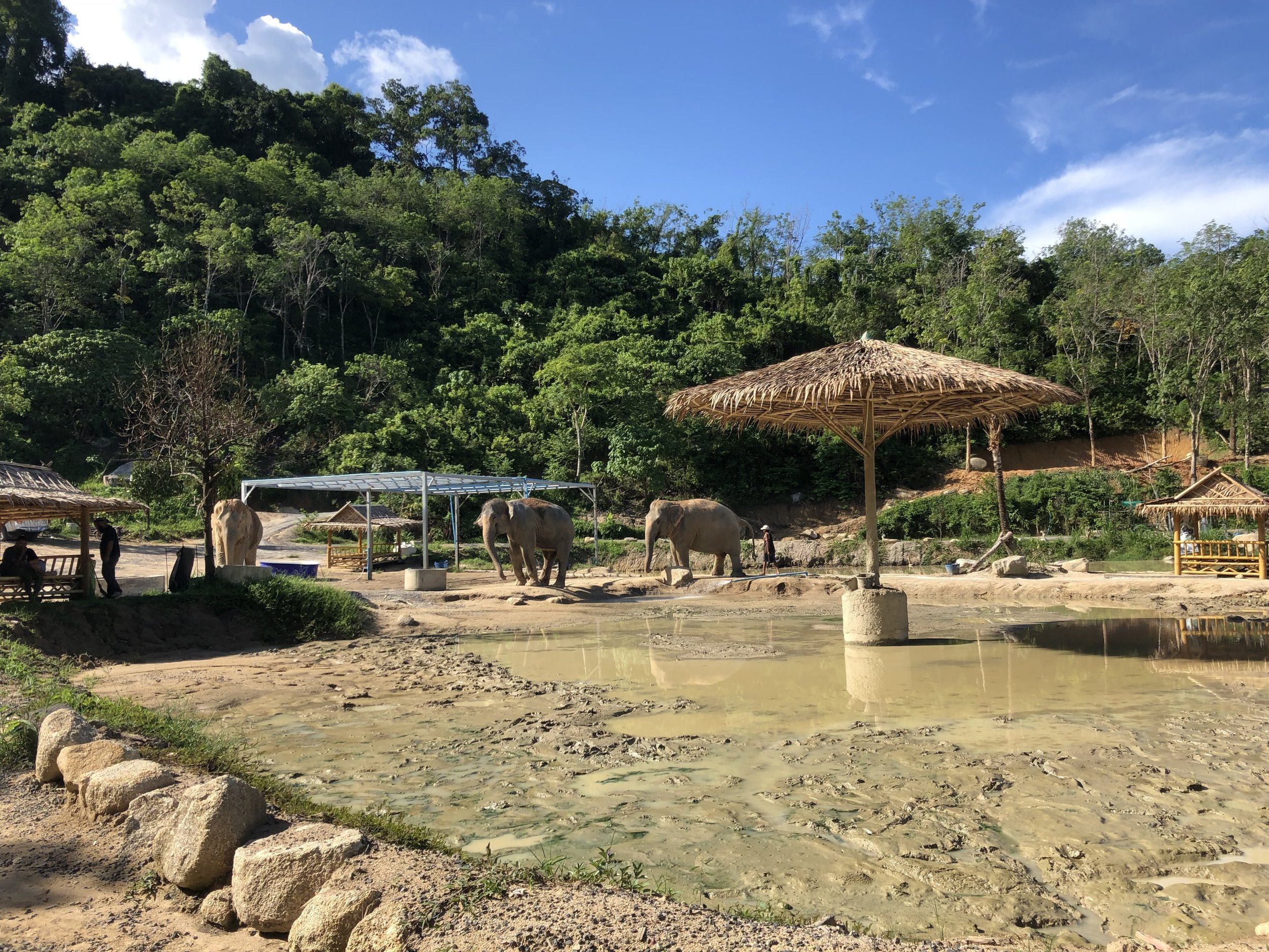 The Elephants living life at the sanctuary