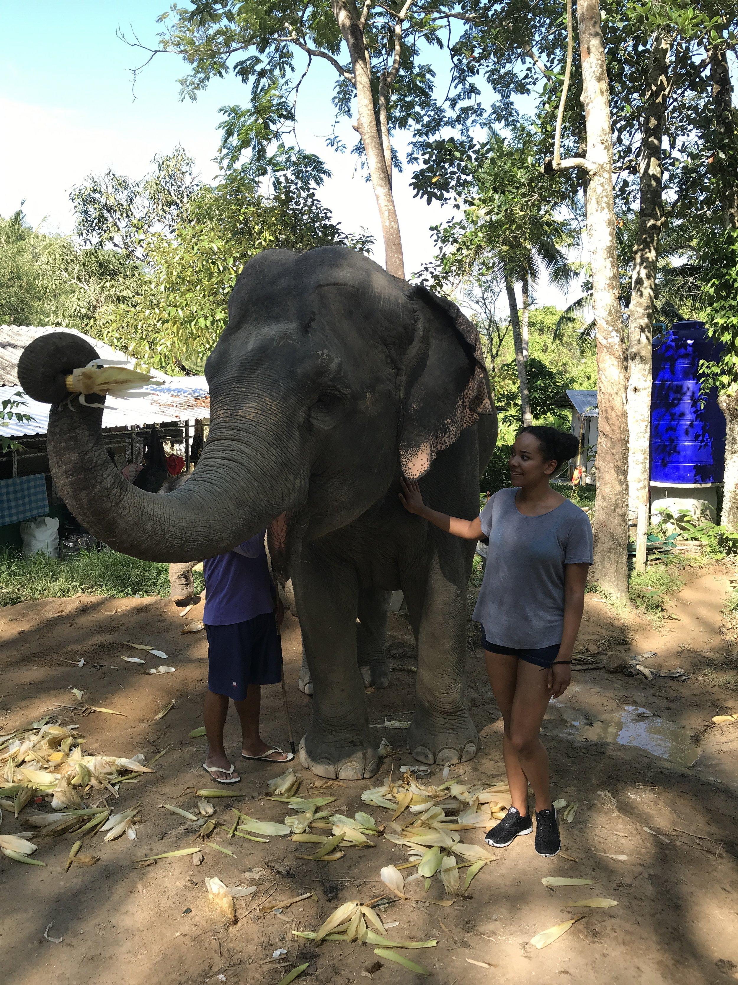 Elephants Phuket Thailand