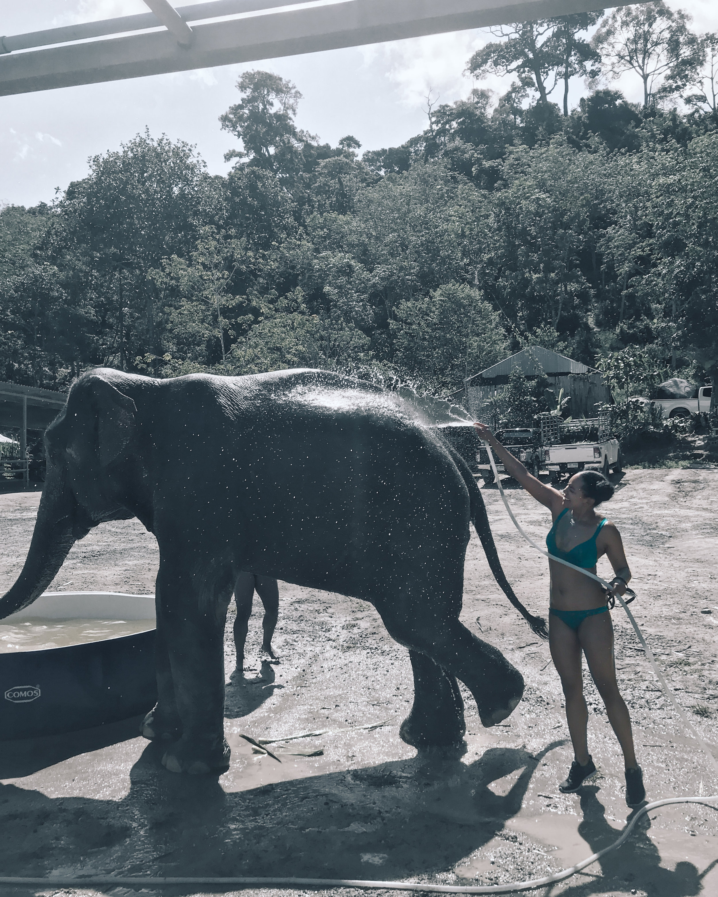 Bathing Elephants in Phuket
