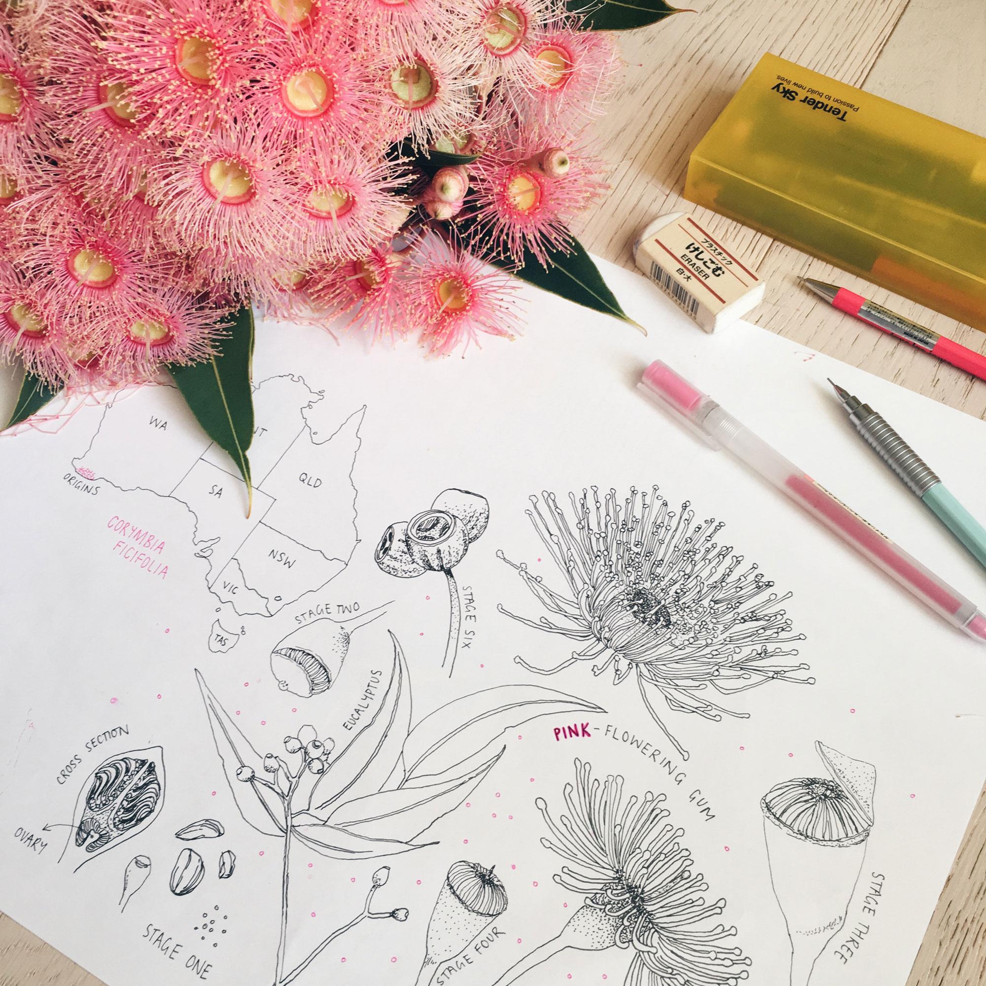 Peita-Blythe_Flowering-Gum_Web.jpg