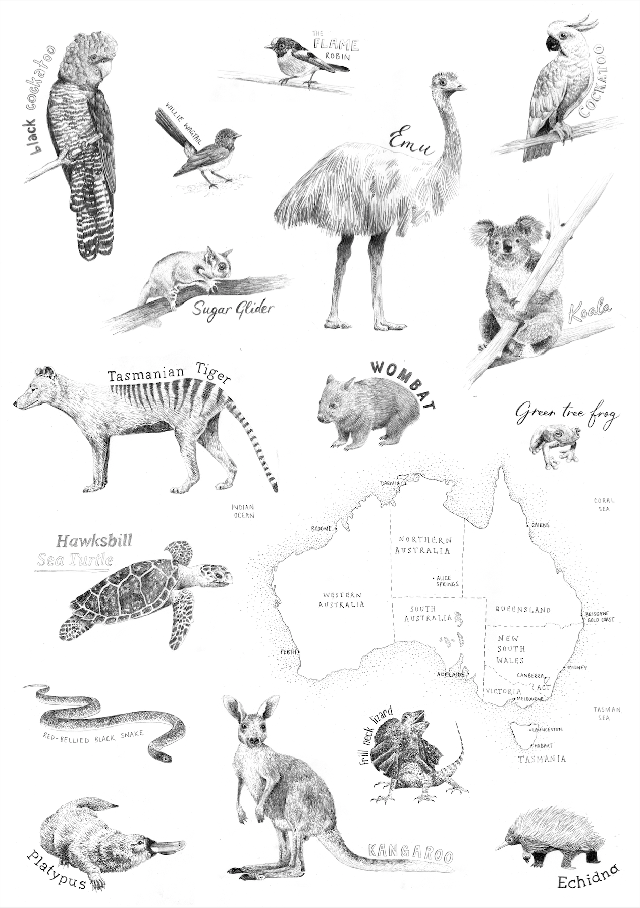 - Australian Animals Print — Peita Blythe