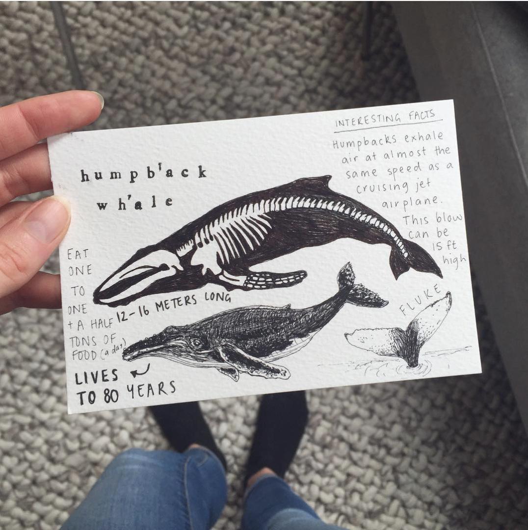 Peita Blythe_Whale Postcard.png