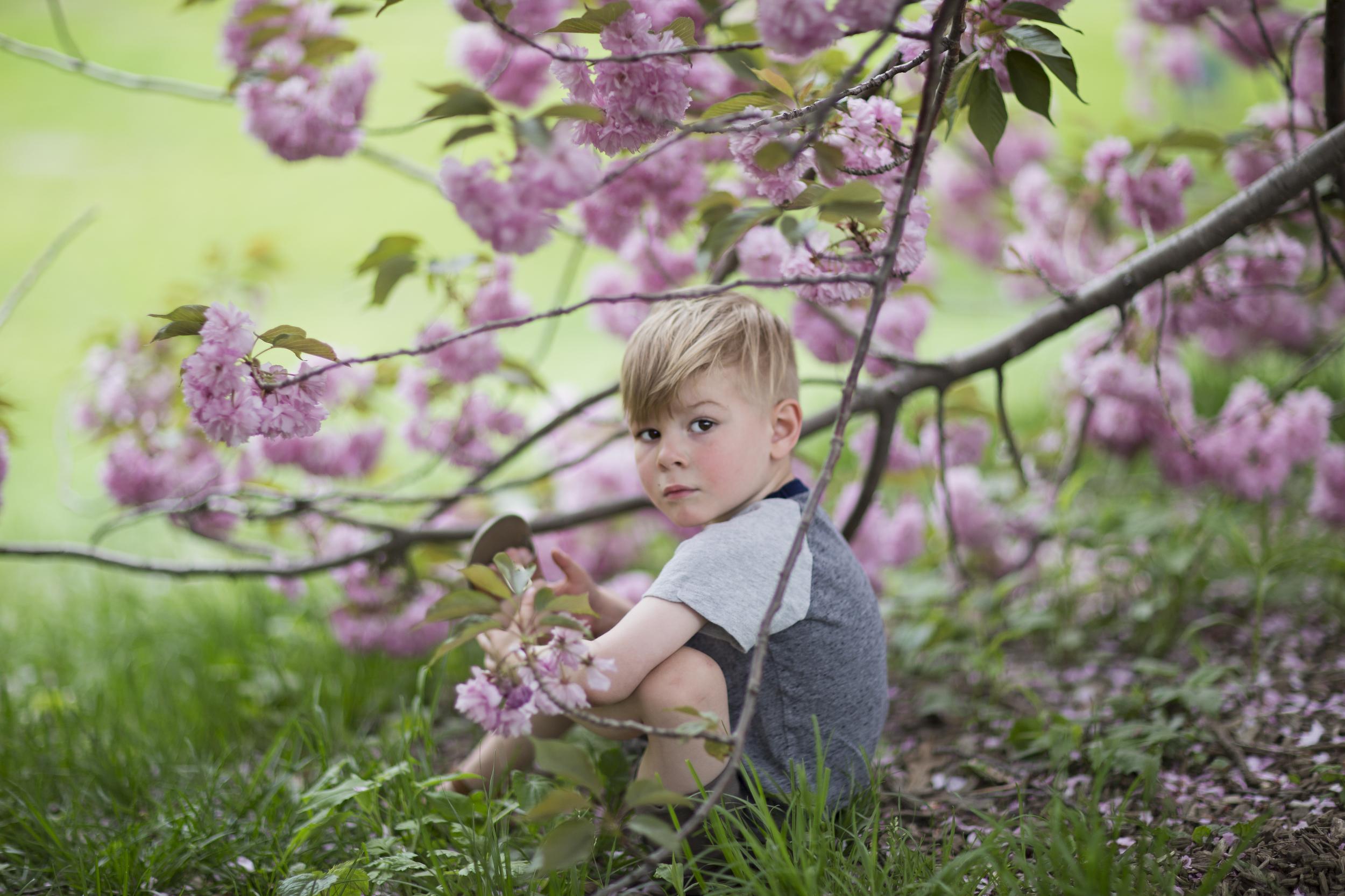 Joseph Blossoms 1.jpg