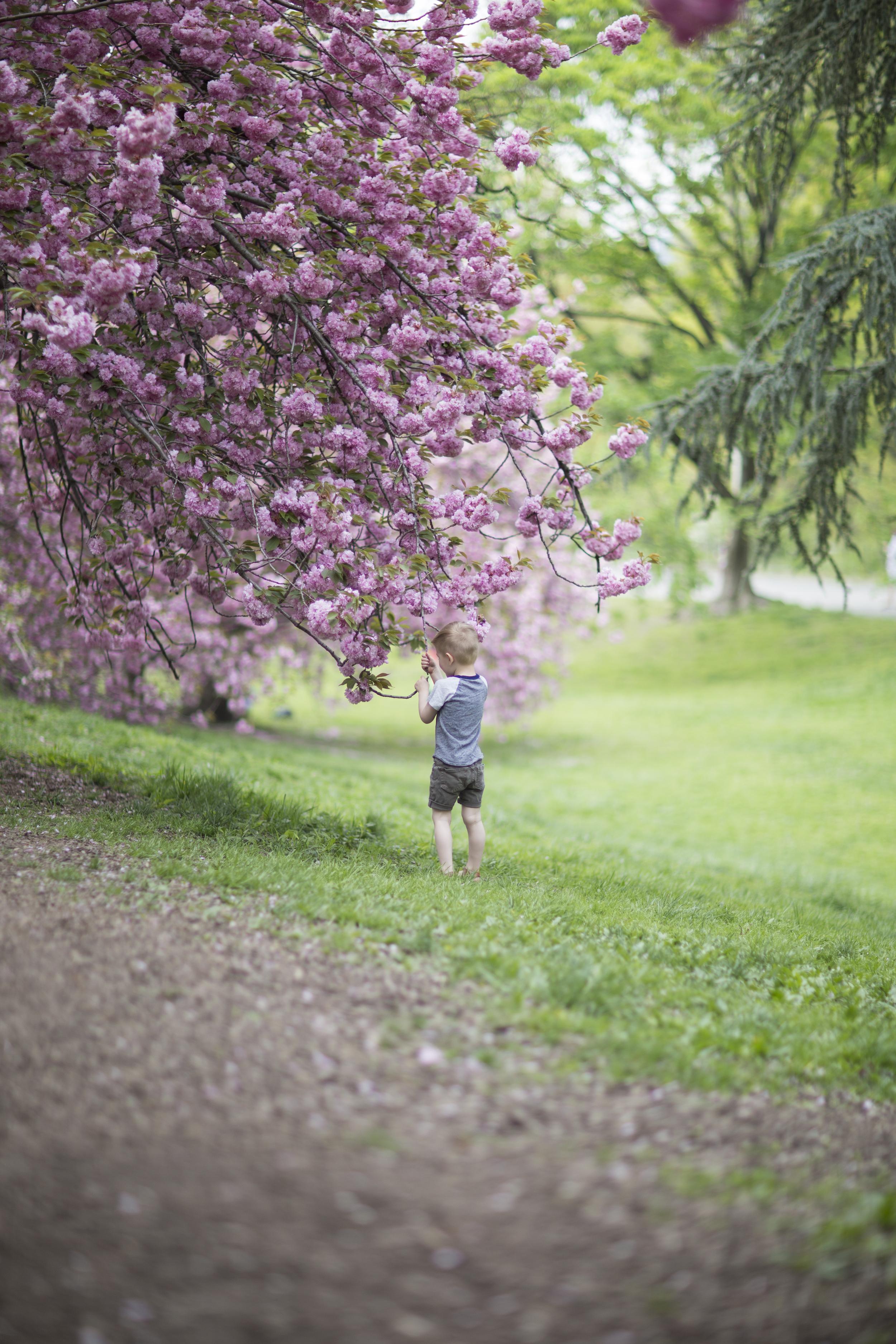 Joseph Blossoms 2.JPG
