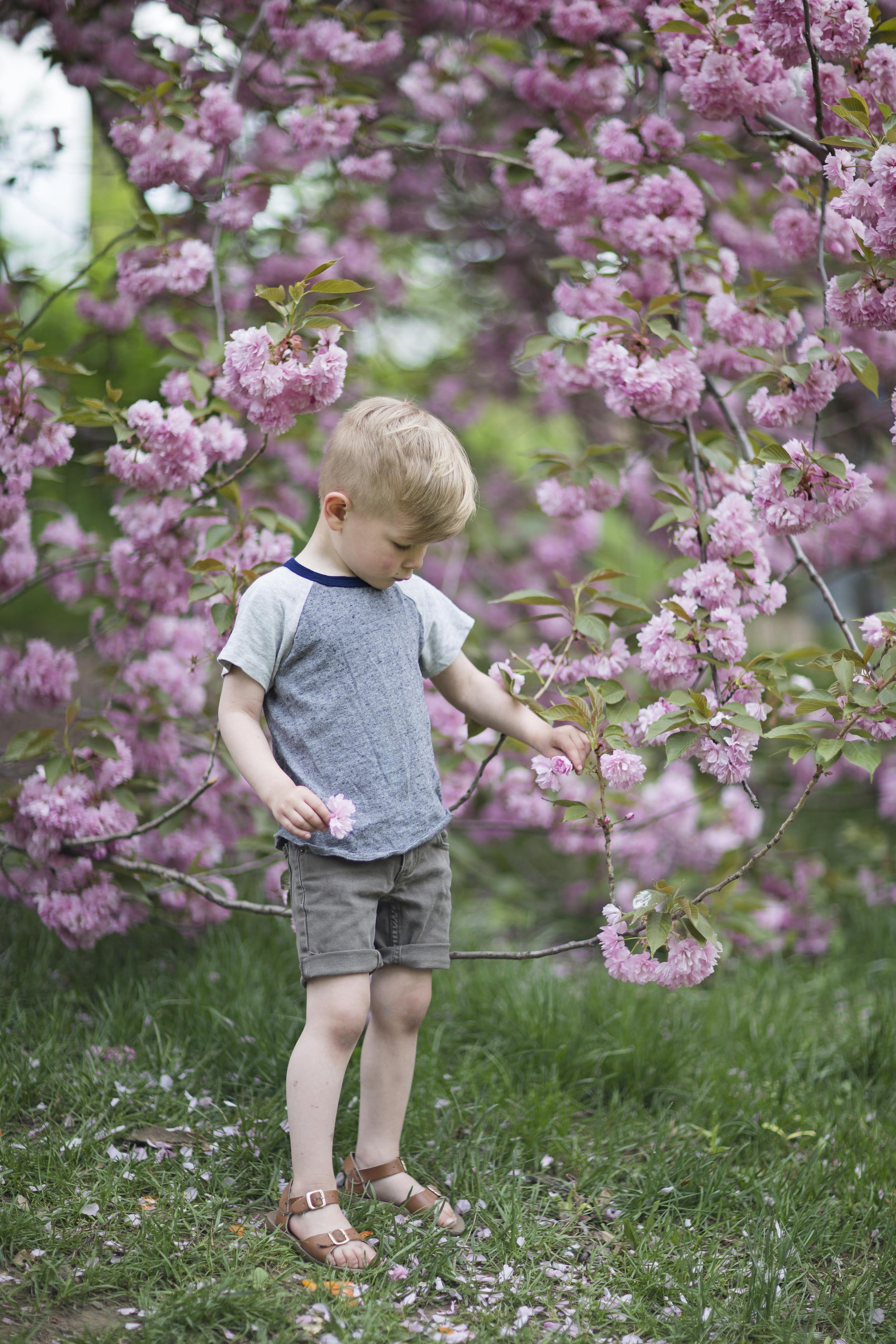 Joseph Blossoms 5.jpg