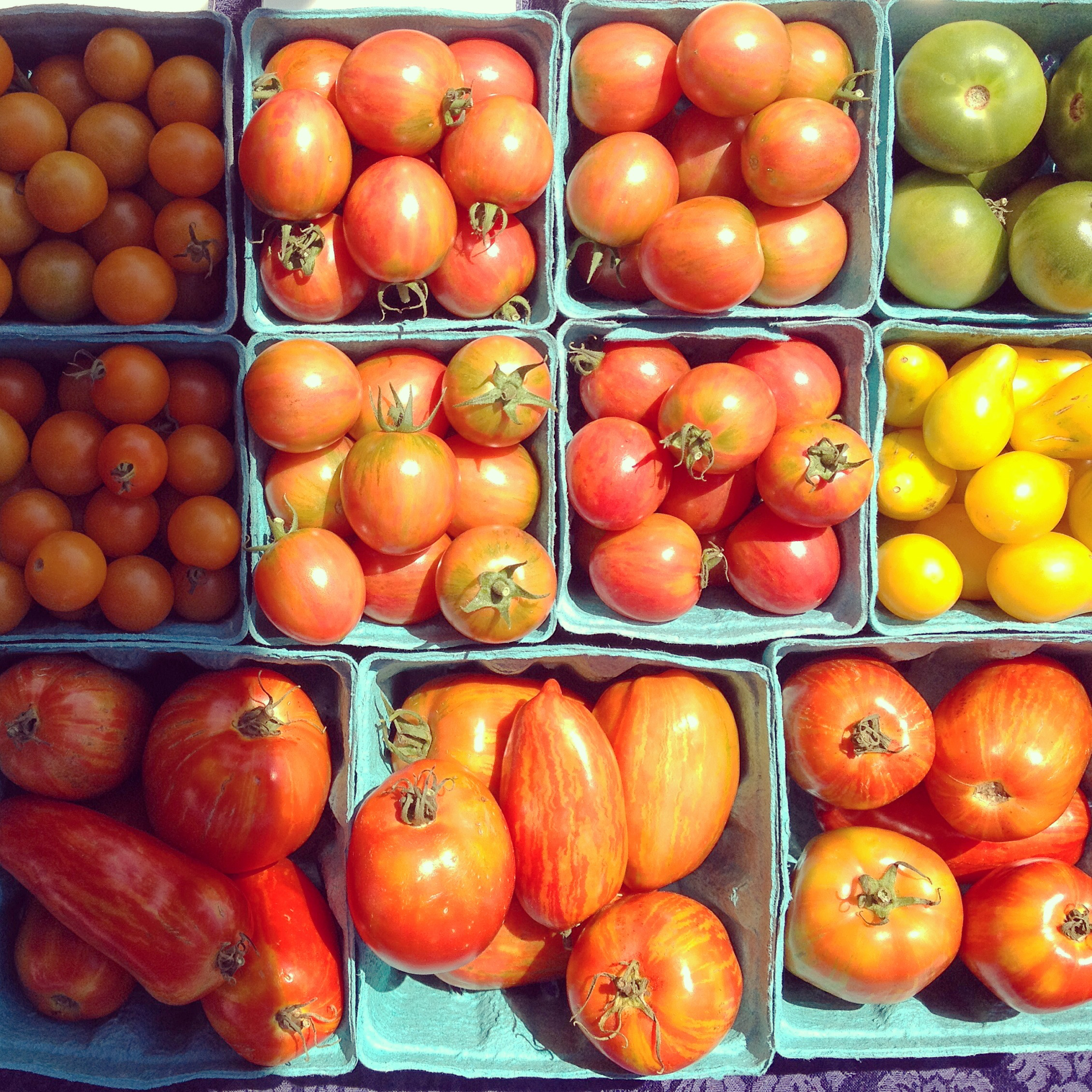 Rainbow cherry tomatoes