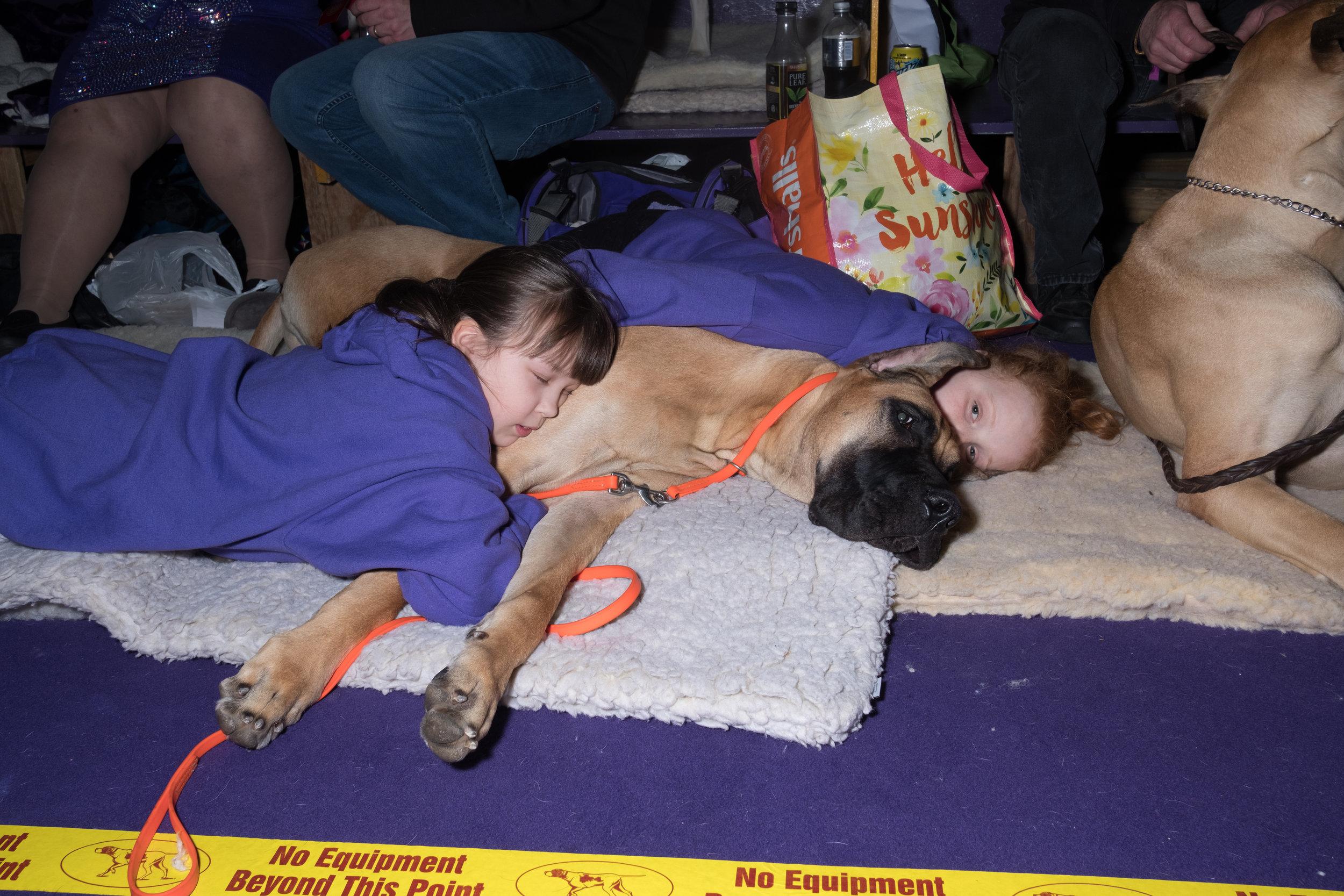 Dog-Show-4498.jpg