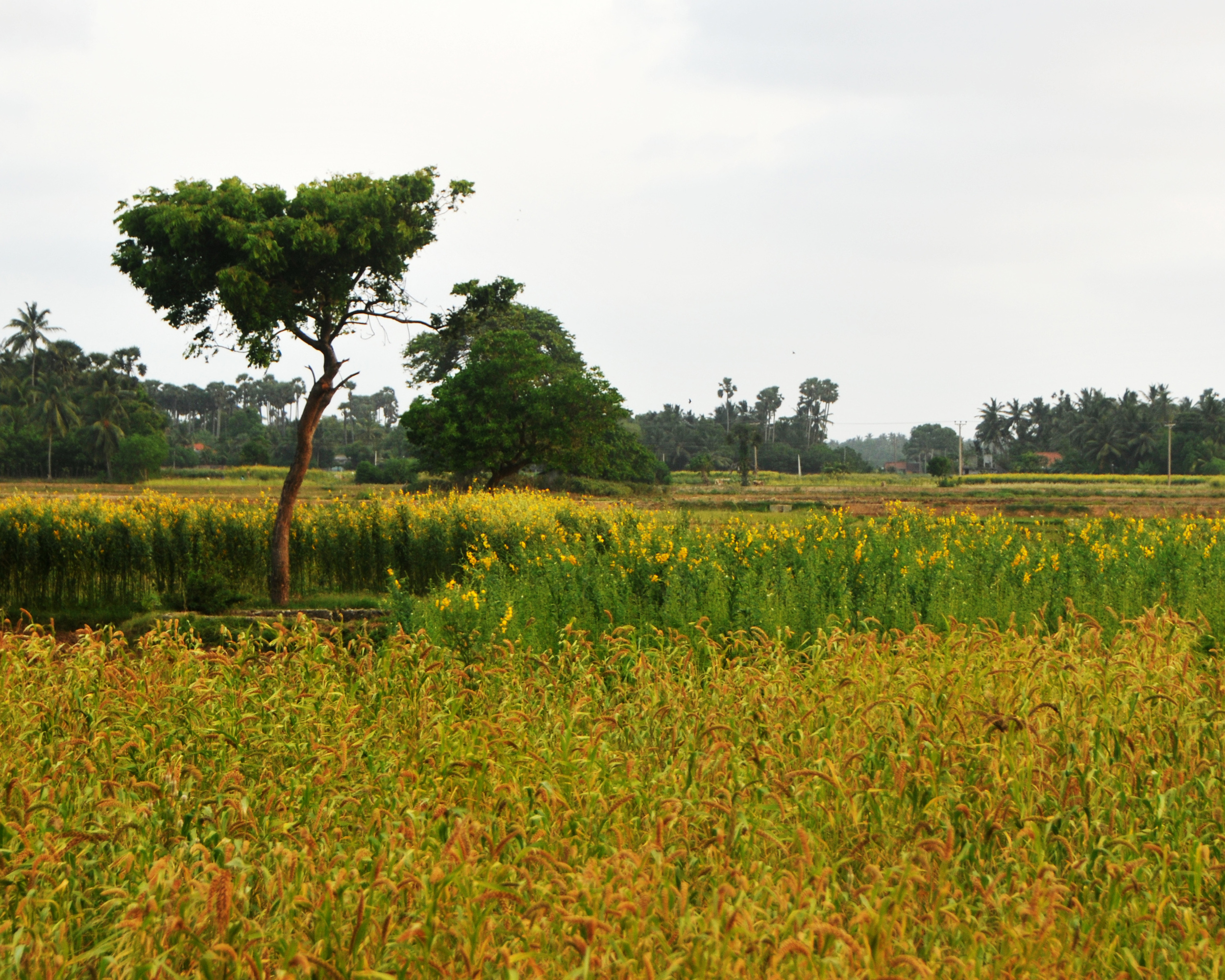 Shrinking Harvests in India and China