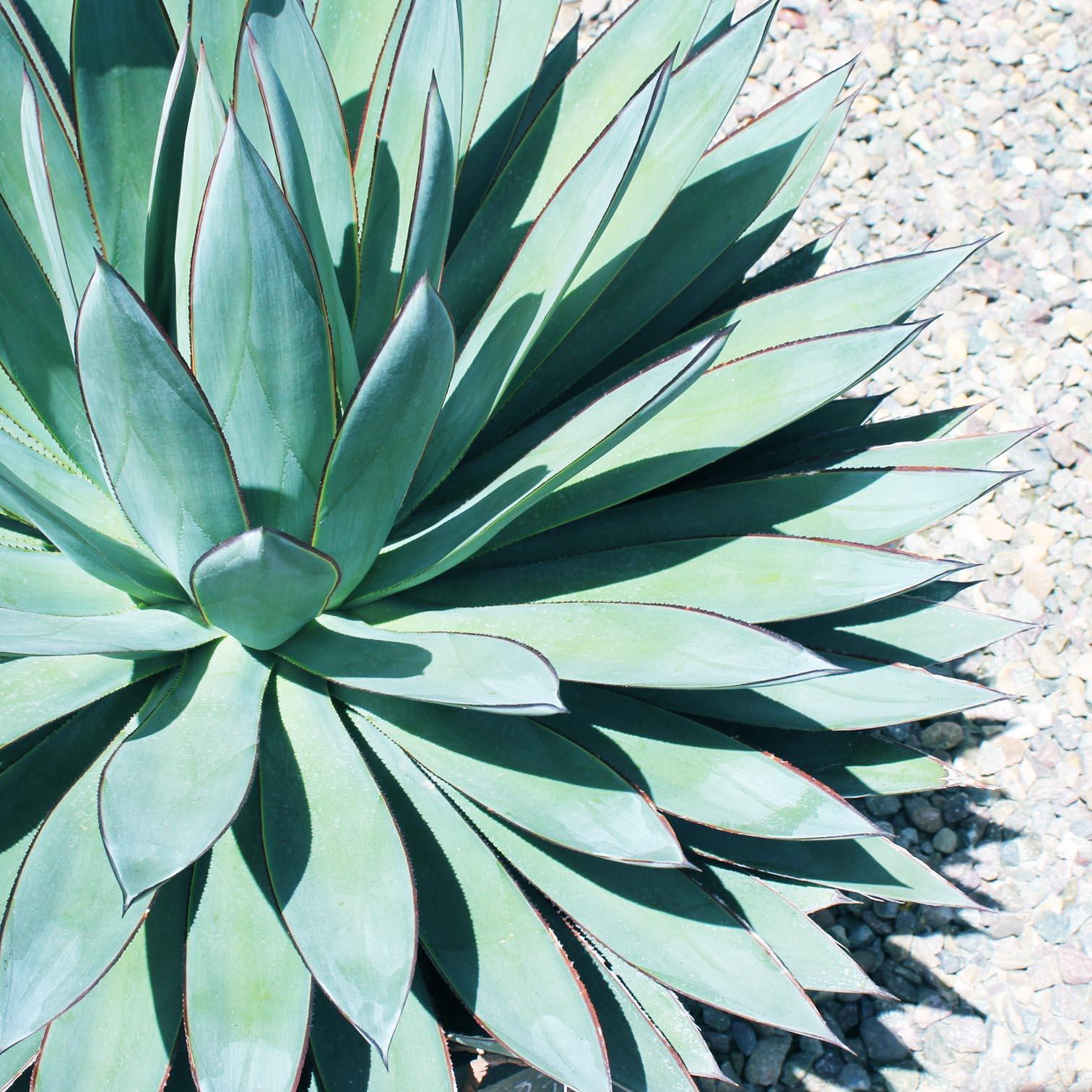 Succulent Insta 1.jpg